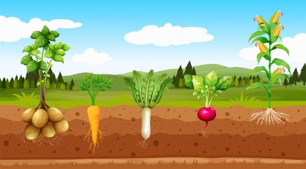 kadar-zakat-pertanian