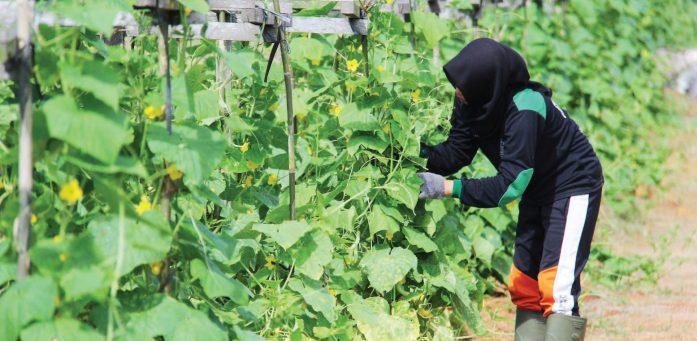 zakat hasil pertanian
