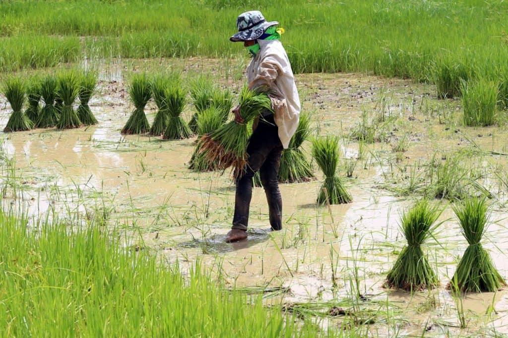 Zakat Hasil Pertanian dan Perkebunan